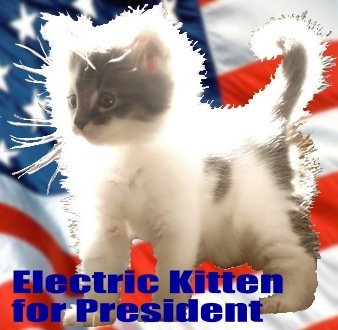 kitten for prez